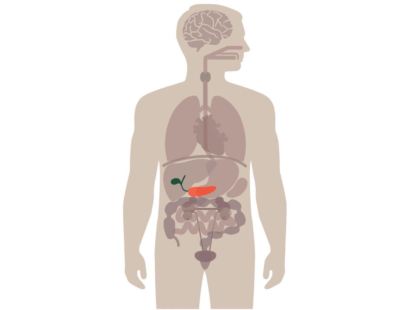 Betere behandeling ernstige alvleesklierontsteking